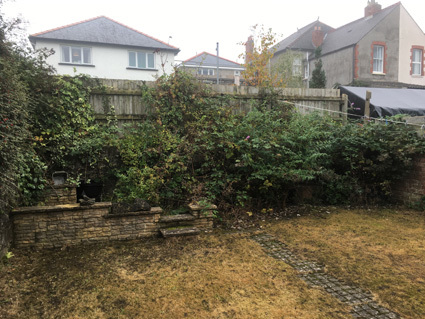 Overgrown garden before the clearance of weeds and brambles
