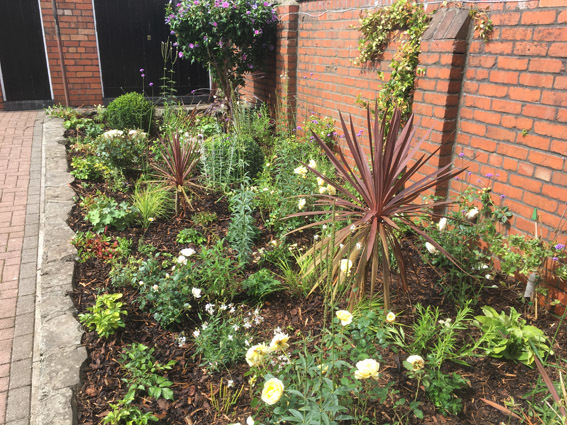Rectangular herbaceous planting bed finished with chipped bark mulch